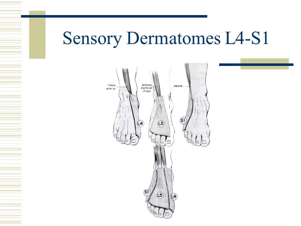 Sensory Dermatomes L4-S1