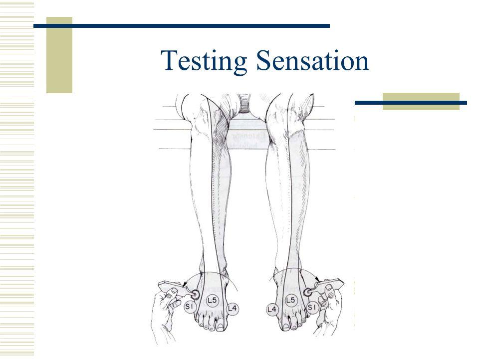 Testing Sensation