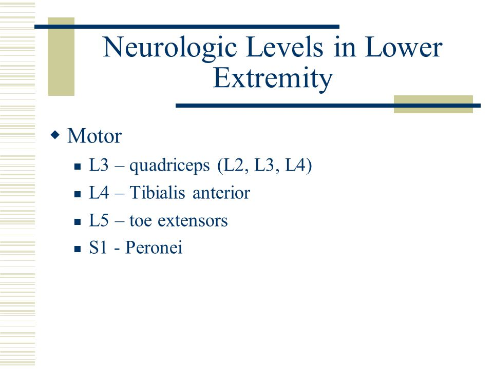 Neurologic Levels in Lower Extremity