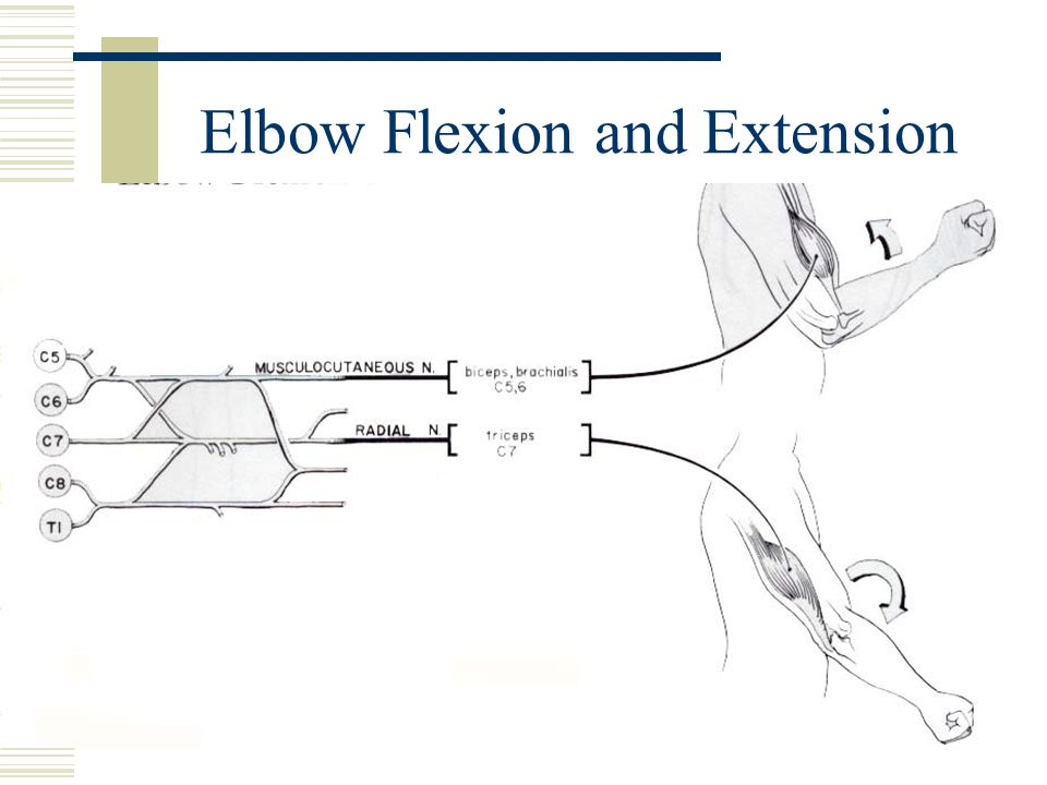 Elbow Flexion and Extension