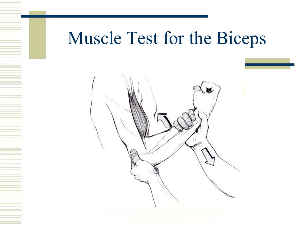 Muscle Test for the Biceps