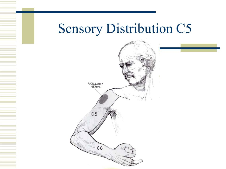 Sensory Distribution C5