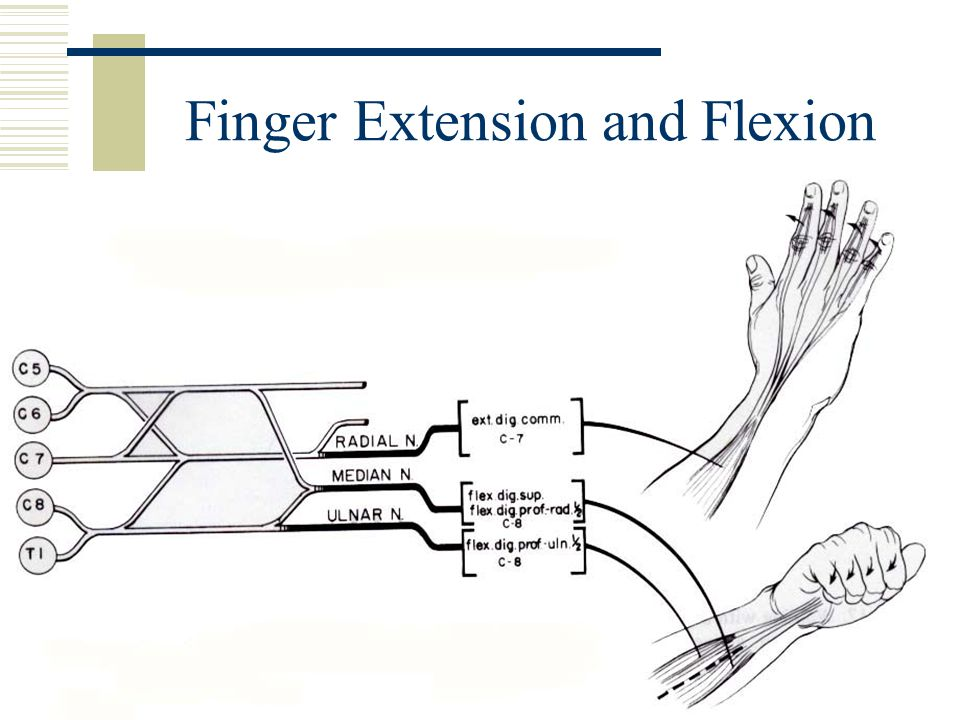 Finger Extension and Flexion