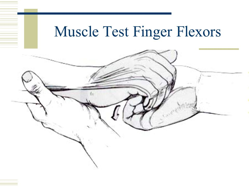 Muscle Test Finger Flexors