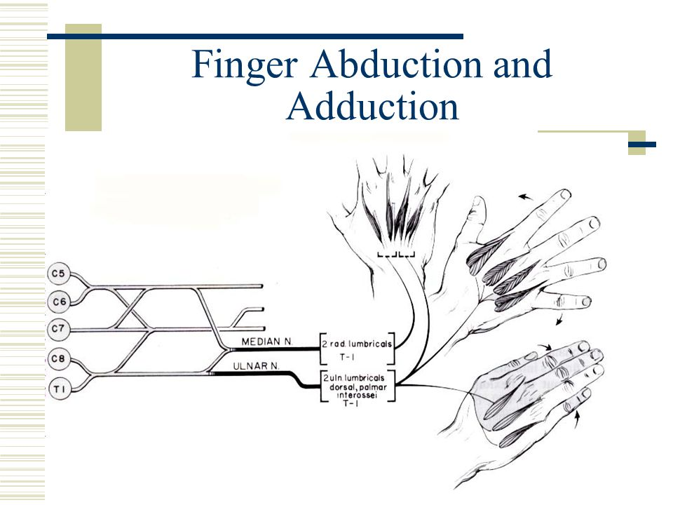 Finger Abduction and Adduction