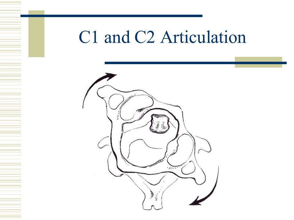 C1 and C2 Articulation