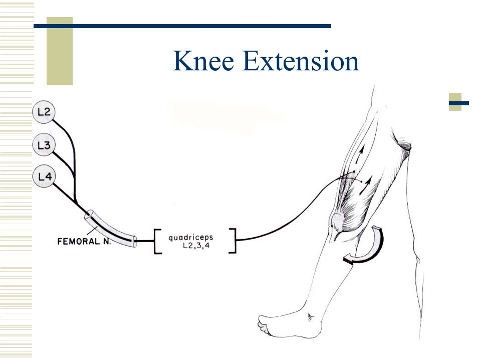 Knee Extension