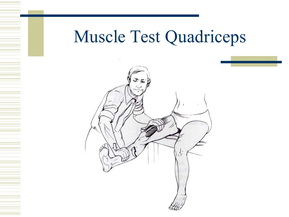 Muscle Test Quadriceps