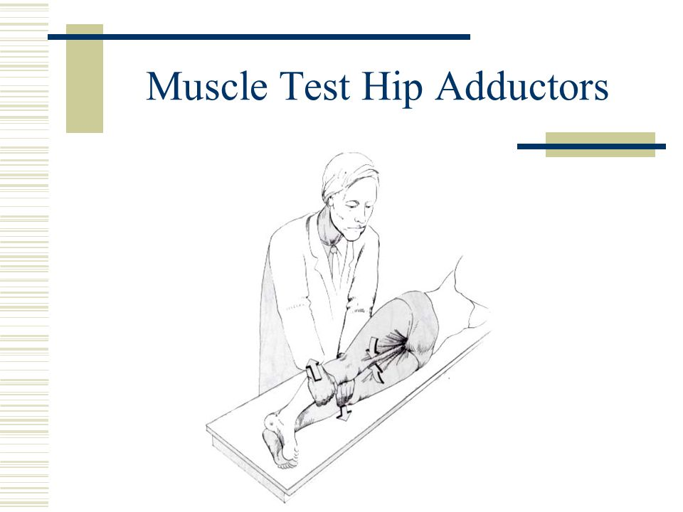 Muscle Test Hip Adductors