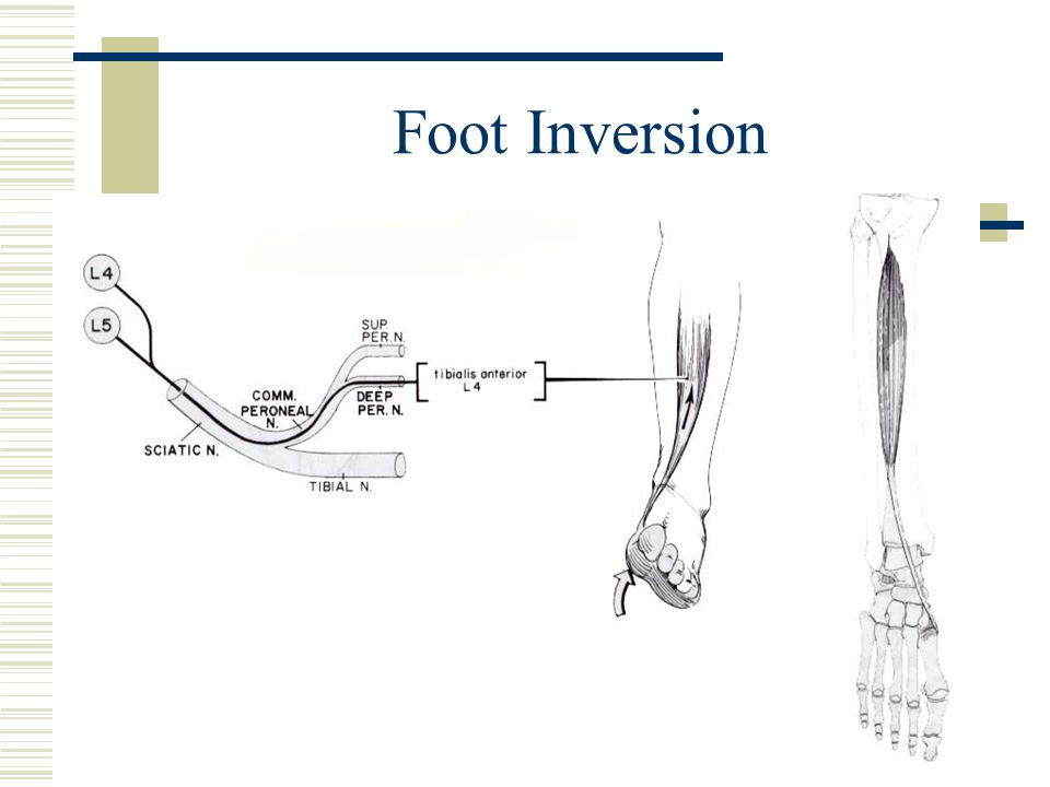 Foot Inversion