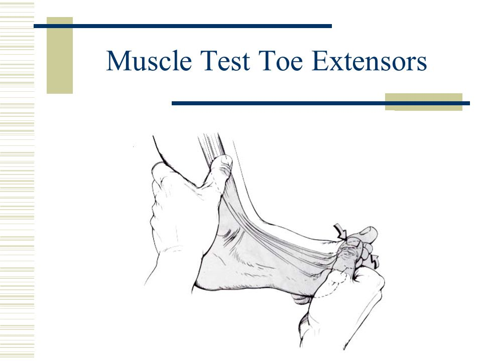 Muscle Test Toe Extensors