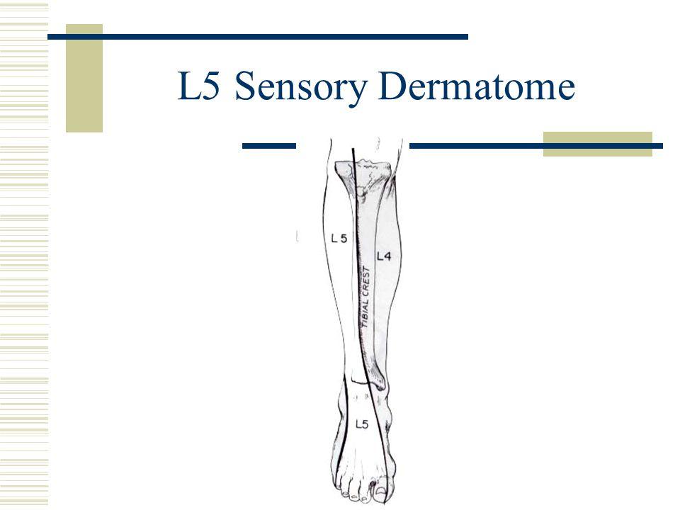 L5 Sensory Dermatome