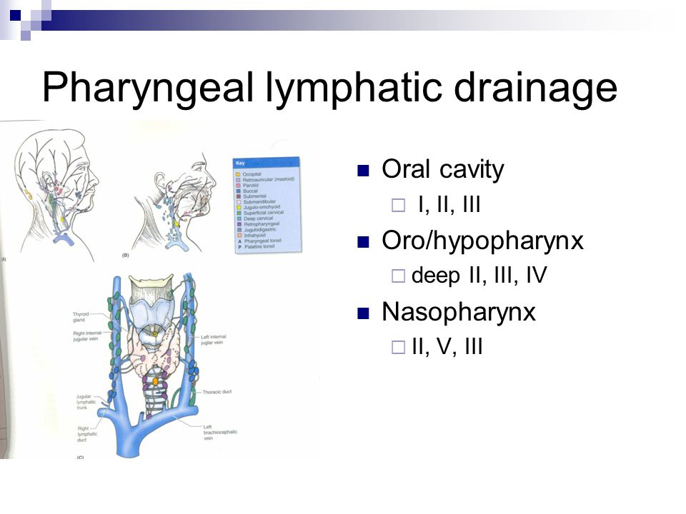 Pharyngeal lymphatic drainage