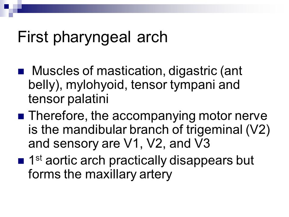 First pharyngeal arch Muscles of mastication, digastric (ant belly), mylohyoid, tensor tympani and tensor palatini.