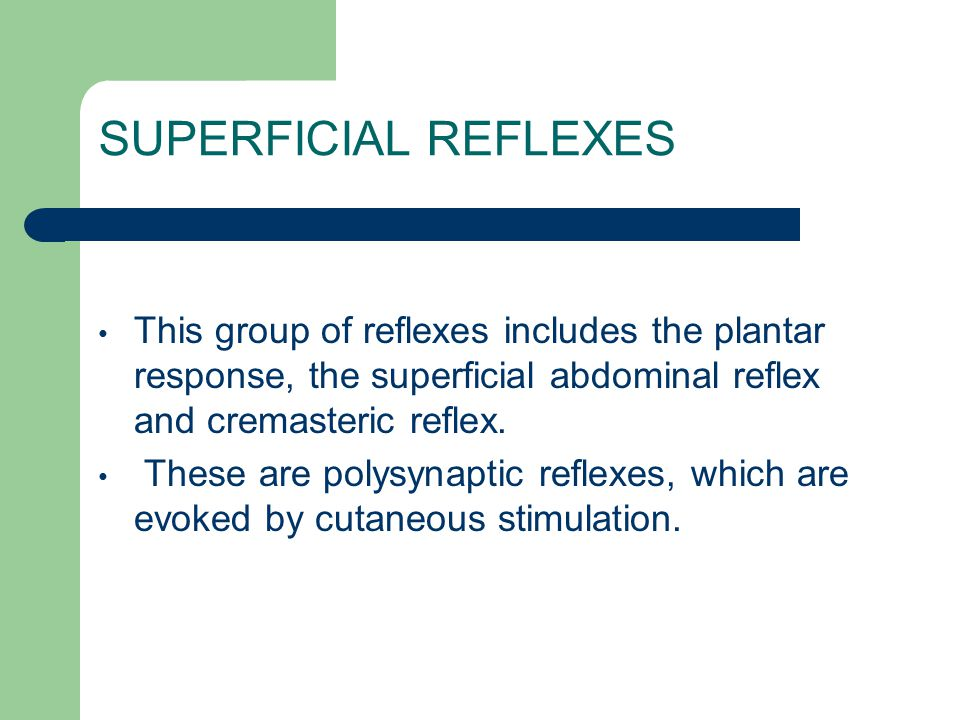 SUPERFICIAL REFLEXES This group of reflexes includes the plantar response, the superficial abdominal reflex and cremasteric reflex.