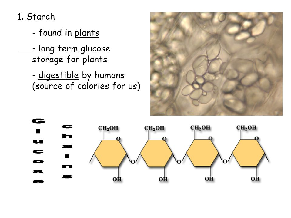Glucose chains 1. Starch - found in plants