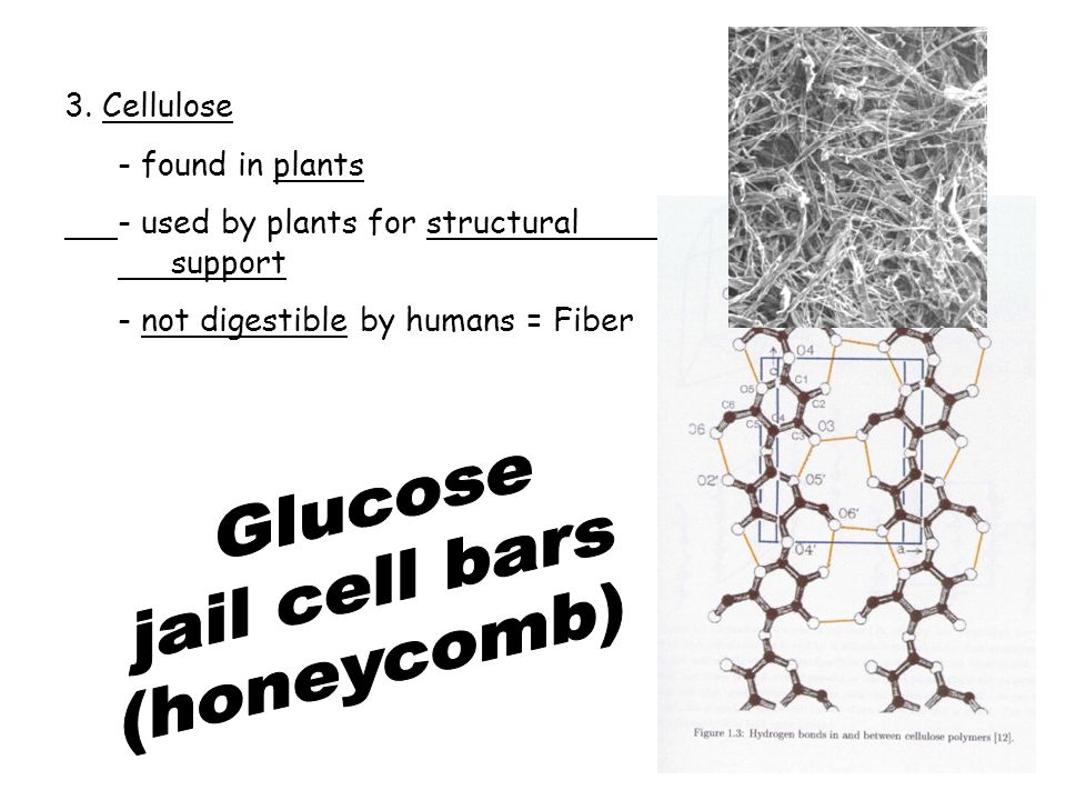 Glucose jail cell bars (honeycomb) 3. Cellulose - found in plants
