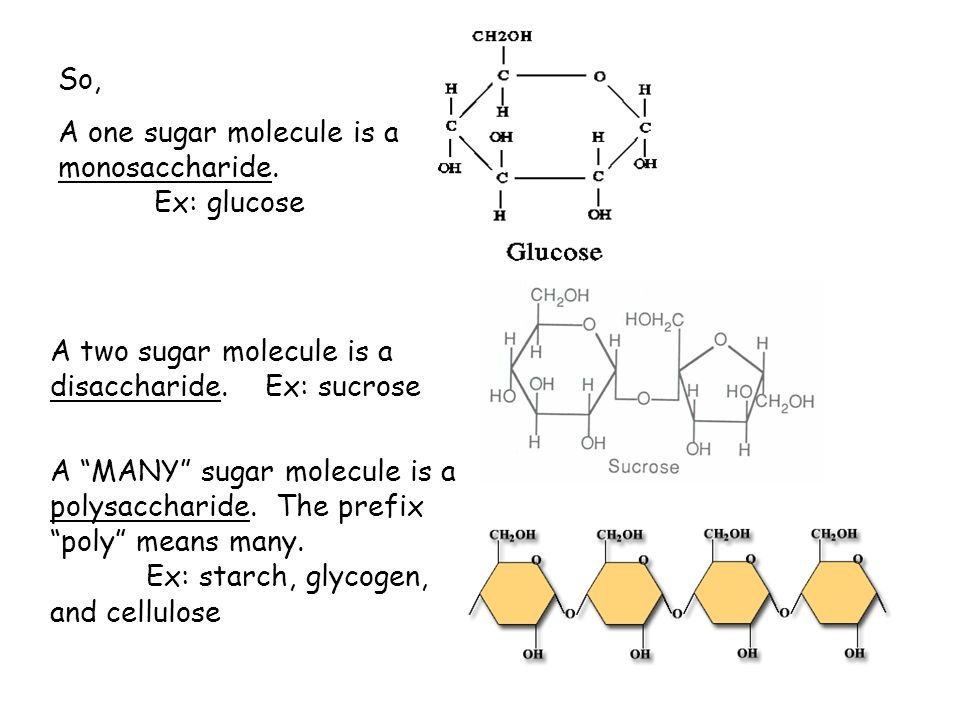 So, A one sugar molecule is a monosaccharide. Ex: glucose. A two sugar molecule is a disaccharide. Ex: sucrose.