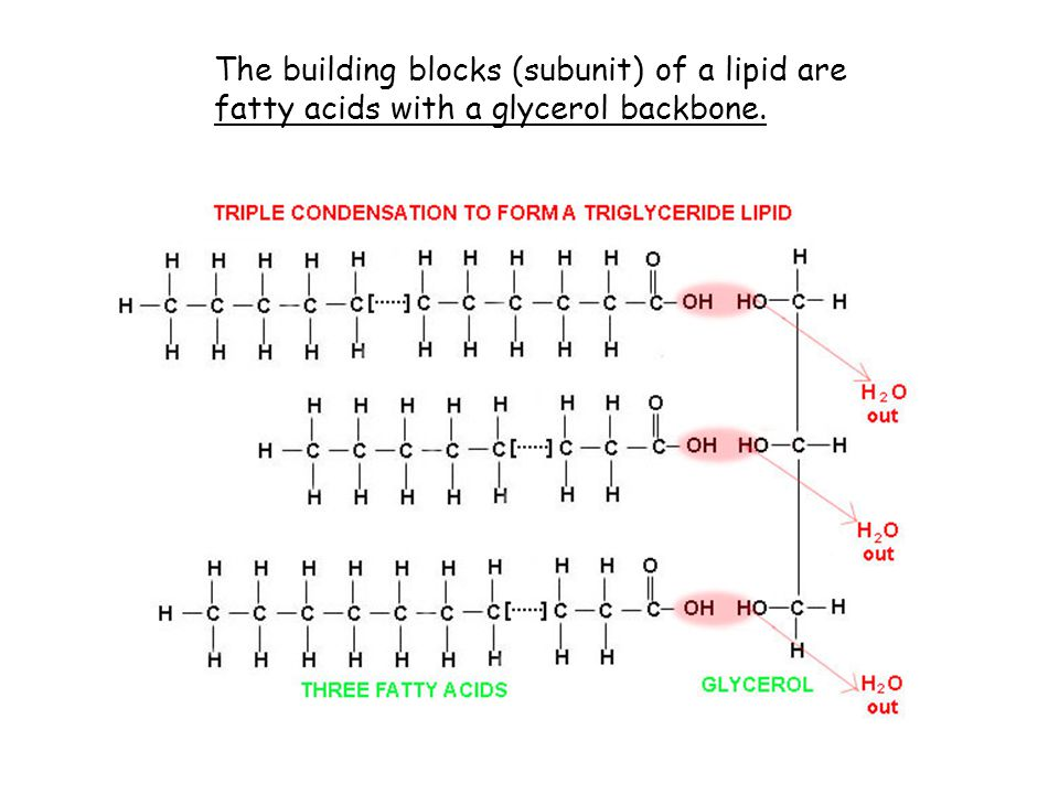 The building blocks (subunit) of a lipid are