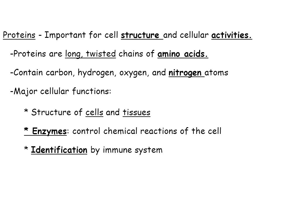 Proteins - Important for cell structure and cellular activities.