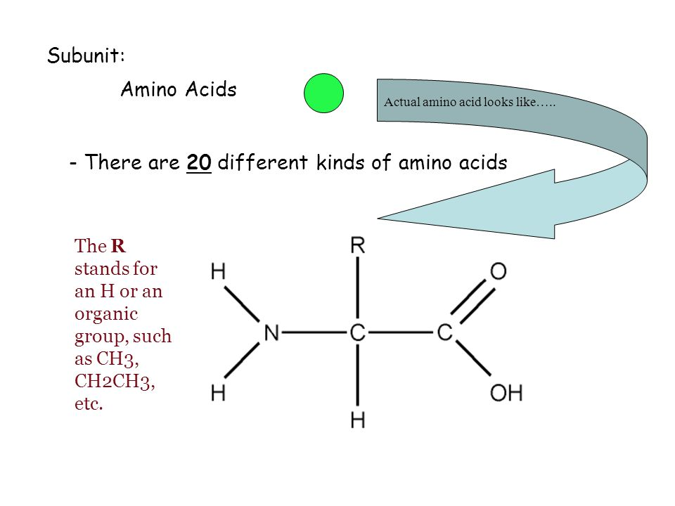 - There are 20 different kinds of amino acids