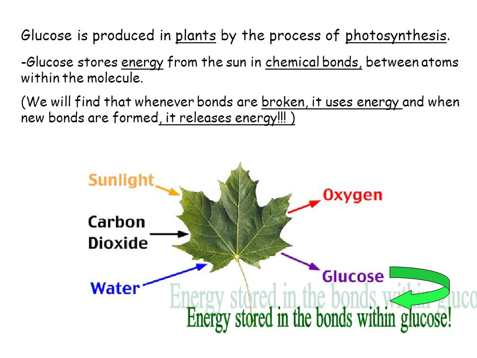 Energy stored in the bonds within glucose!