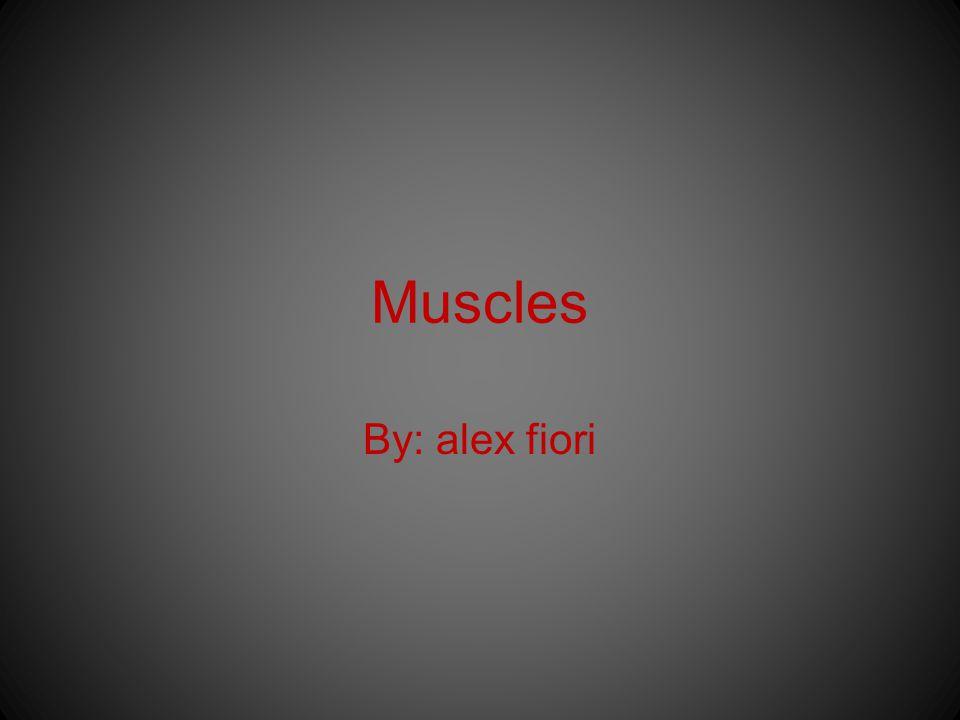 Muscles By: alex fiori