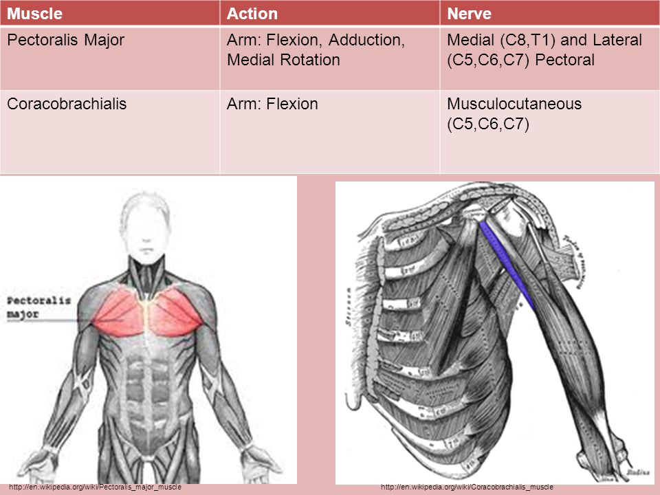 Arm: Flexion, Adduction, Medial Rotation