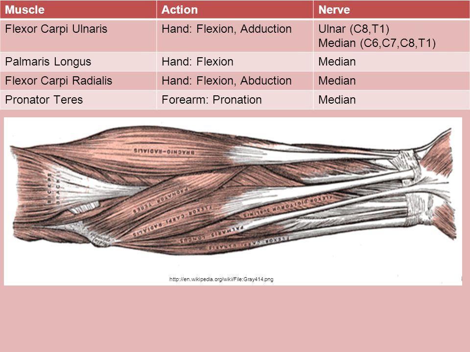 Hand: Flexion, Adduction Ulnar (C8,T1) Median (C6,C7,C8,T1)