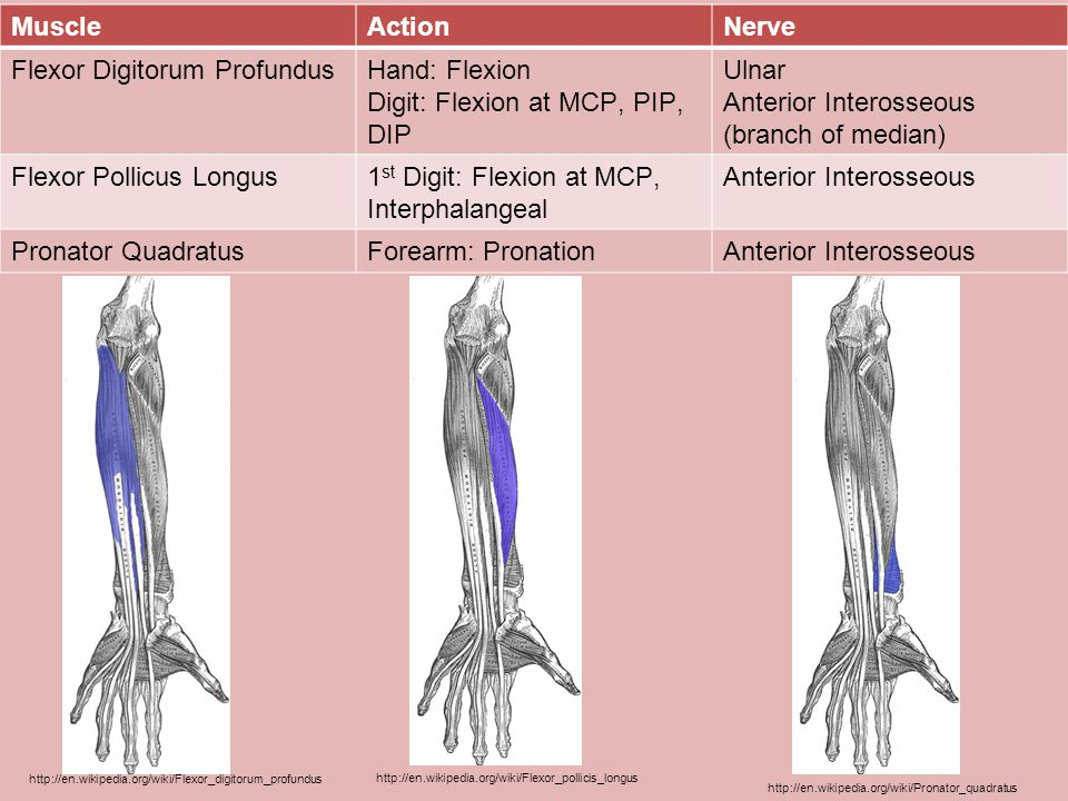 Flexor Digitorum Profundus Hand: Flexion