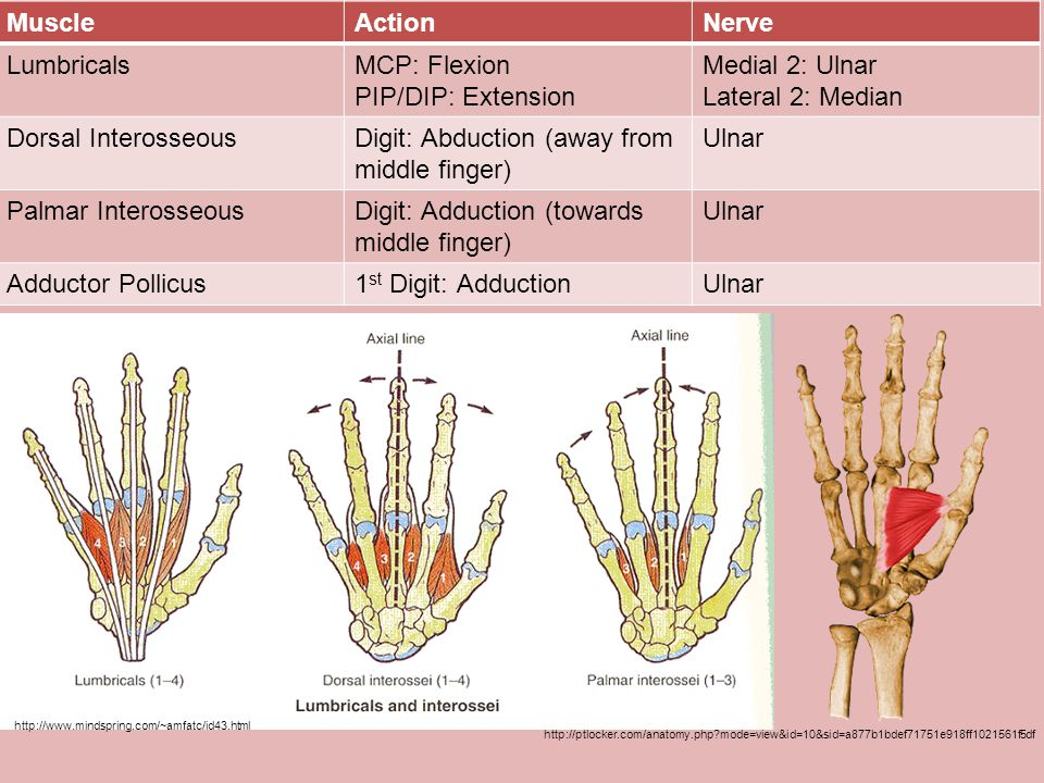 Digit: Abduction (away from middle finger) Ulnar Palmar Interosseous