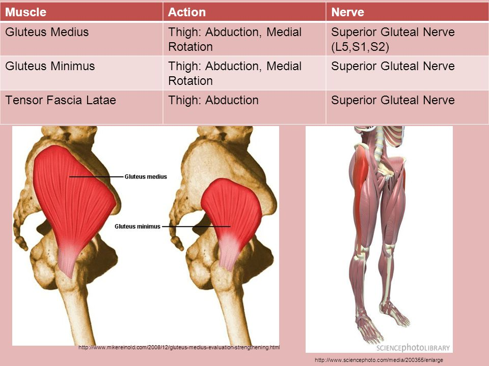 Thigh: Abduction, Medial Rotation Superior Gluteal Nerve (L5,S1,S2)