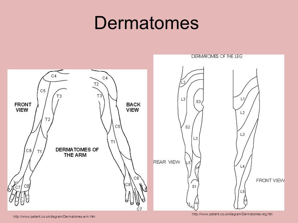 Dermatomes http://www.patient.co.uk/diagram/Dermatomes-leg.htm