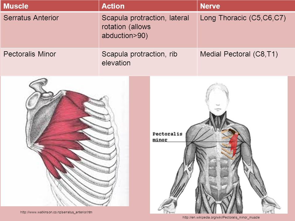 Scapula protraction, lateral rotation (allows abduction>90)