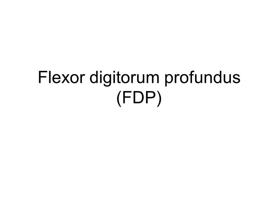 Flexor digitorum profundus (FDP)