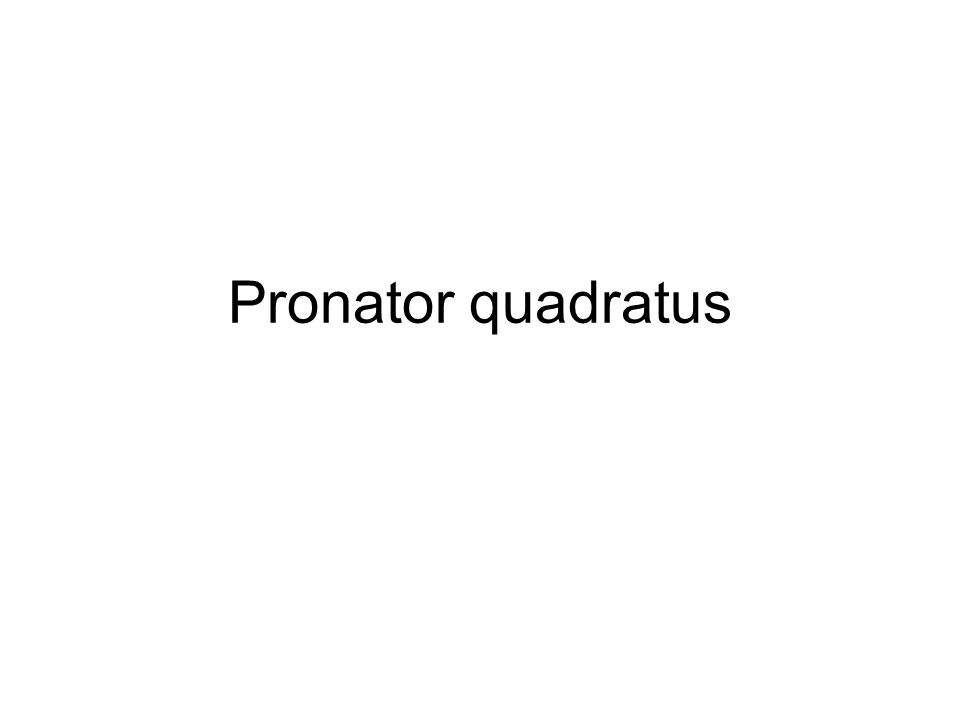 Pronator quadratus