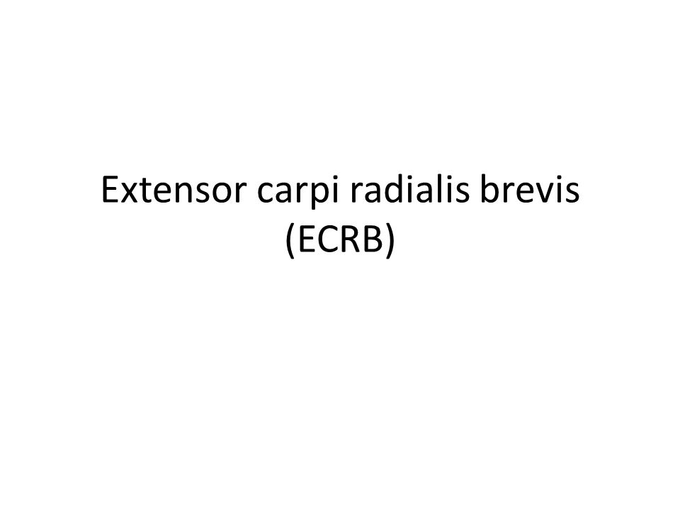 Extensor carpi radialis brevis (ECRB)