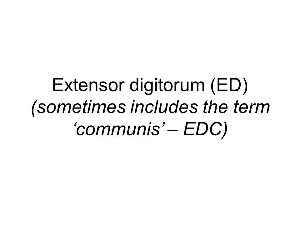 Extensor digitorum (ED) (sometimes includes the term 'communis' – EDC)