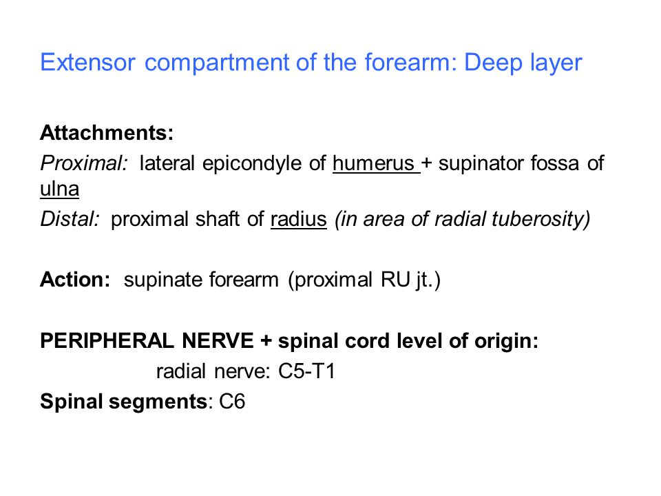 Extensor compartment of the forearm: Deep layer