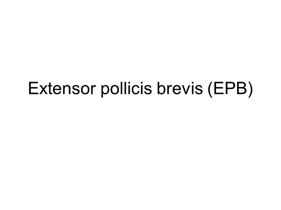 Extensor pollicis brevis (EPB)