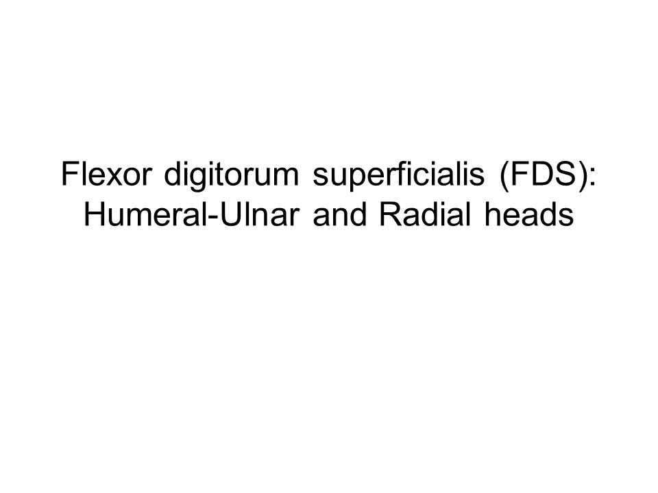Flexor digitorum superficialis (FDS): Humeral-Ulnar and Radial heads