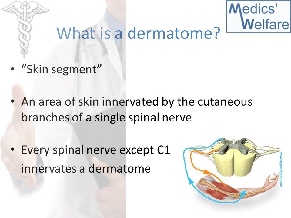 What is a dermatome Skin segment