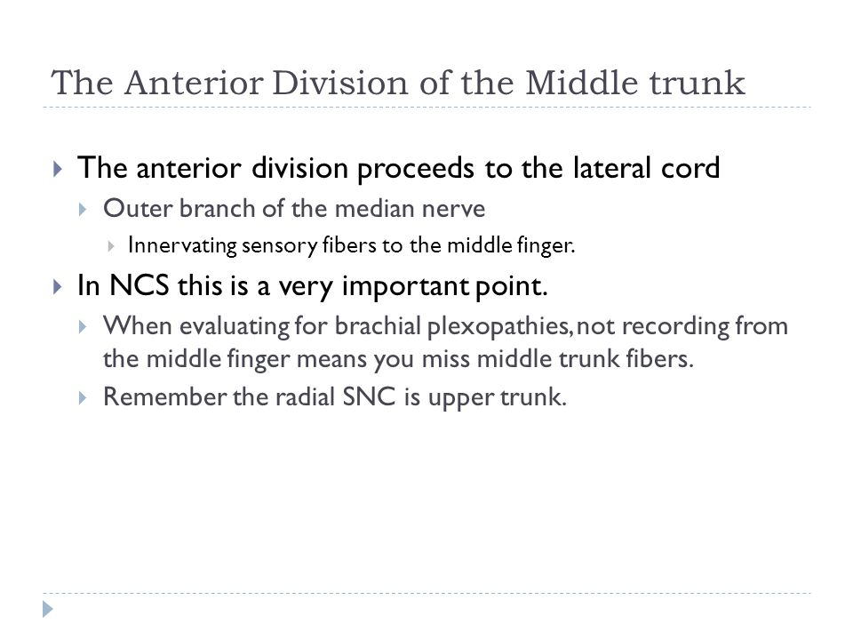 The Anterior Division of the Middle trunk