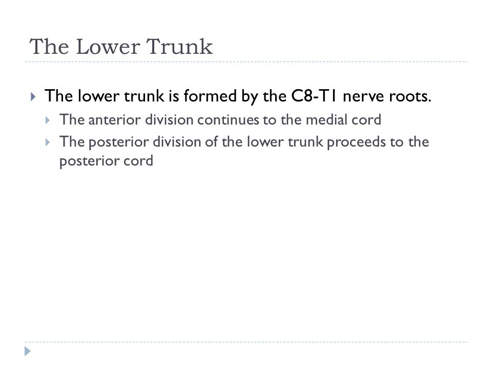 The Lower Trunk The lower trunk is formed by the C8-T1 nerve roots.