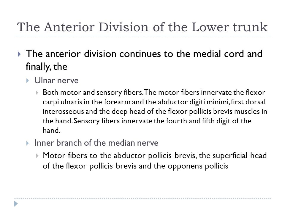 The Anterior Division of the Lower trunk