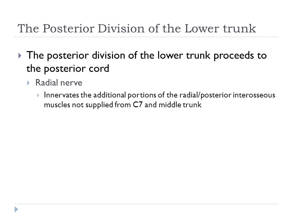 The Posterior Division of the Lower trunk