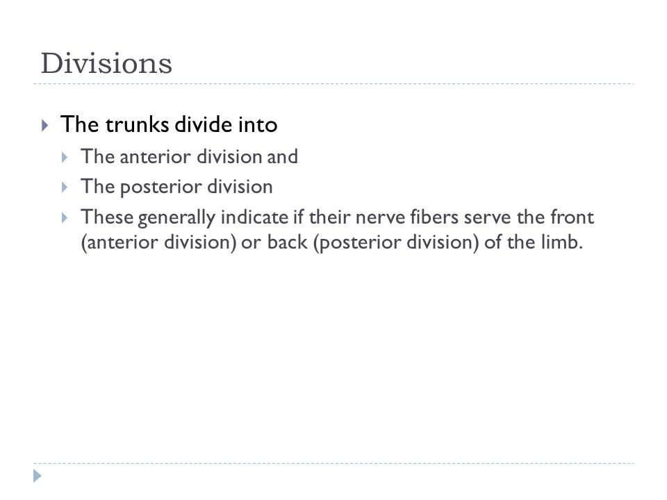 Divisions The trunks divide into The anterior division and