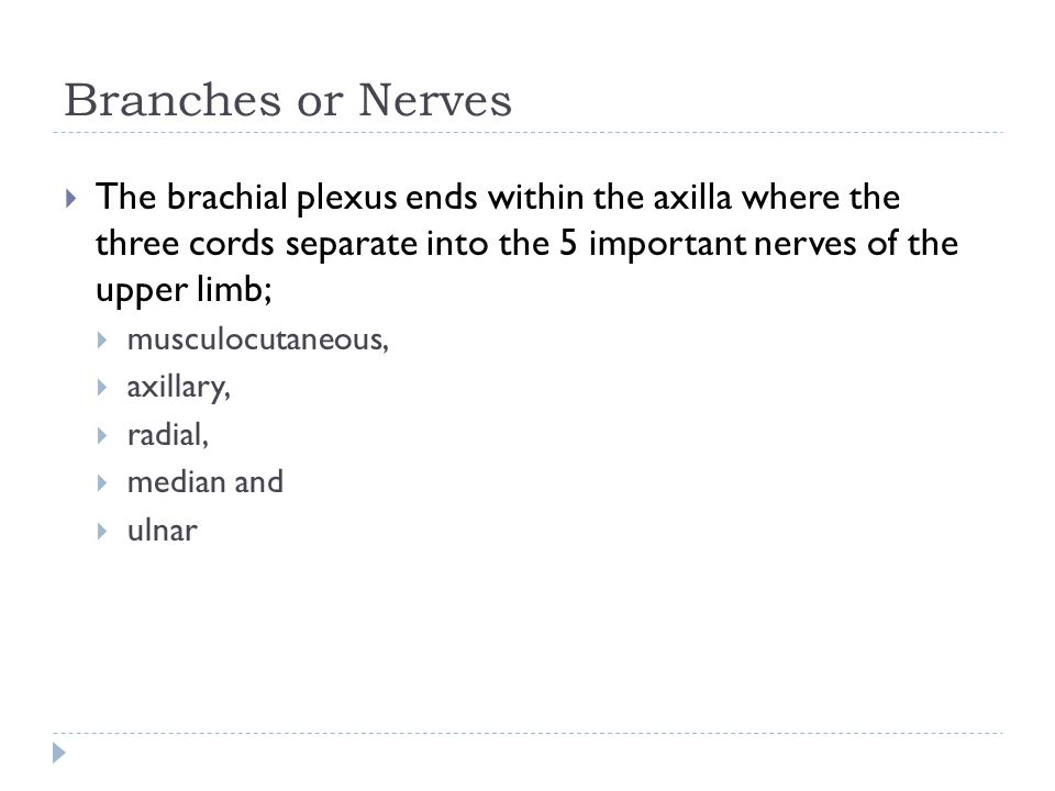 Branches or Nerves The brachial plexus ends within the axilla where the three cords separate into the 5 important nerves of the upper limb;