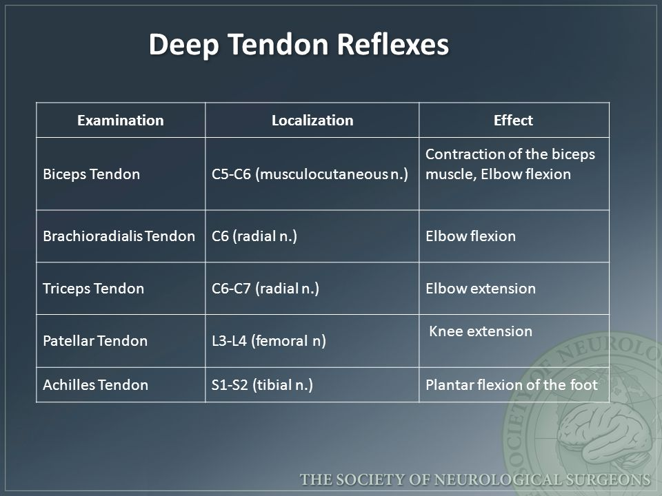 Deep Tendon Reflexes Examination Localization Effect Biceps Tendon