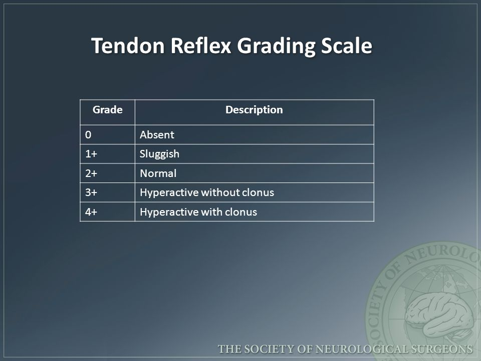 Tendon Reflex Grading Scale
